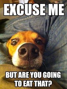 #DogsLove #DogsAreTheBest #DogsAreLove http://www.amazon.com/Dog-Brush-DeShedding-Tool-DOCTOR/dp/B00EZE6BZK/ie=UTF8?m=A2RF1CHABDH4JG&keywords=shedding+comb