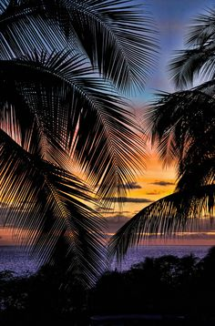 New Wallpaper Iphone Summer Hawaii Tropical Palm Trees 25 Ideas Tree Silhouette Wallpaper, Palm Tree Silhouette, Palm Tree Pictures, Nature Pictures, Beautiful Pictures, Tree Wallpaper Iphone, Sunset Wallpaper, Palm Tree Drawing, Landscape Pictures