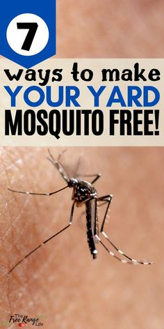 Learn how to prevent mosquitoes from breeding in your yard plus 7 different natural ways to repel and keep mosquitoes away. Here's to a happy summer with less mosquito bites, less itching, and more fun in the sun! Mosquito Larvae, Mosquito Trap, Natural Mosquito Repellant, Mosquito Repelling Plants, Home Made Mosquito Repellent, Remedies For Mosquito Bites, Bug Spray Recipe, Keeping Mosquitos Away, Detox Your Home