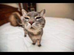 Lustige Katzen Videos zum totlachen Teil 1 2013360p H 264 AAC - YouTube