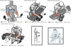 Workout Experiences Chest:  Triceps:  Biceps:  Shoulders:   Back:  Legs:   Abs:  Others:     Fitness Workouts, Fitness Gym, Weight Training Workouts, Gym Workout Tips, Fit Board Workouts, Wellness Fitness, Muscle Fitness, Bodybuilding Training, Bodybuilding Workouts