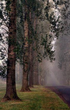 ~~Mist tree lane by TONY...~~