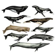 Muchas ballenas  #ilustración #illustration #acuarela #watercolor #ballenas…