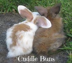 ♥ 3 little bunnies snuggling