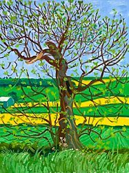 Official Works by David Hockney including exhibitions, resources and contact information. David Hockney Landscapes, David Hockney Artist, David Hockney Paintings, Fields In Arts, Richard Burlet, 21st Century Artists, Pop Art Movement, Arte Pop, Tree Art
