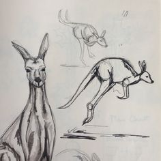 Kangaroo sketches animals for alphabet kangaroo drawing, kan Animal Sketches, Animal Drawings, Art Sketches, Pencil Art Drawings, Easy Drawings, Kangaroo Drawing, Girl Sketch, Art Girl, Cute Pictures