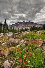 Mt Shasta Wildflowers - California