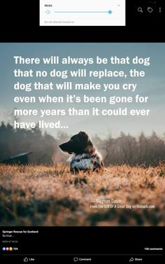 Make You Cry, How To Make, Make It Yourself, Pets, Animals And Pets