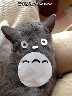 Is That You, Totoro?  // funny pictures - funny photos - funny images - funny pics - funny quotes - #lol #humor #funnypictures