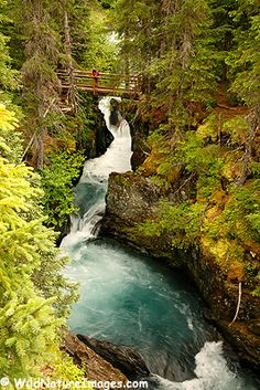 Winner creek Trail; Girdwood, Alaska   One of my favorites- leads to a hand tram over the creek!