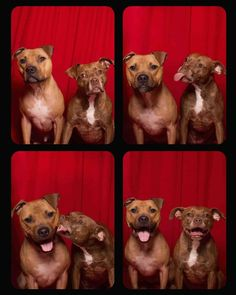 She Put Rescued Dogs In A Photo Booth And Their Awesome Personalities Came Right Out