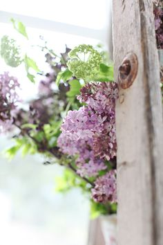 Lilacs. My favorite smelling flower in the garden. We have a Lilac bush just outside our bedroom door next to the deck. Love to fill our bedroom up with bouquets in the spring :)