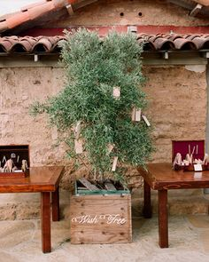 An olive tree, which now lives in the home of the couple as a reminder of their special day, was turned into a wish tree