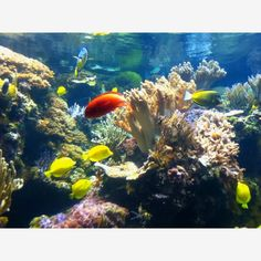 National Aquarium! I just love tropical fish <3