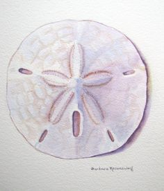 Sand Dollar Seashell Art Print Beach Shell Painting, Reproduction of Original Watercolor, Barbara Rosenzweig, Etsy, Seashore Home Decor Gift by BarbaraRosenzweig on Etsy https://www.etsy.com/listing/130351435/sand-dollar-seashell-art-print-beach