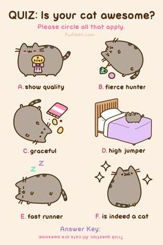 Pusheen the Cat is always awesome! Kawaii so cute, too! Fat Cats, Cats And Kittens, Crazy Cat Lady, Crazy Cats, Pusheen Love, Pusheen Gif, Pusheen Cakes, Pusheen Stuff, Funny Animals