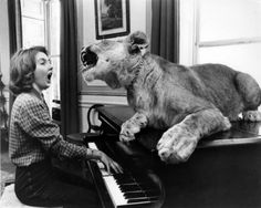 Lion singing with a piano player; Art on Canvas by John Drysdale