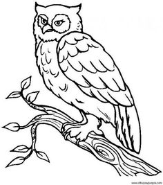 free owl coloring page owl animal coloring pages 10 printable coloring page