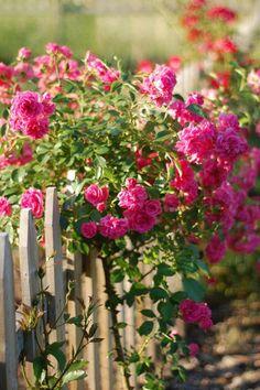 Idées pour aménager son jardin, sa terrasse, son balcon; pour décorer un mur, une fenêtre, une porte...  http://www.cultiversonjardin.fr/box/16/Box-Fleurs-Grimpantes