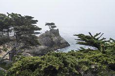 The Lone Cypress, 17-Mile Drive, California