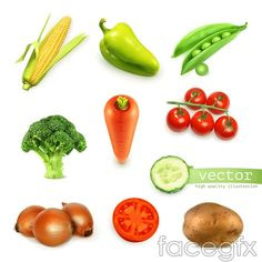 Vegetables icon vector