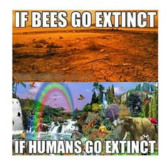 Take care of our planet please! We need it, more than it needs us! #positivevibes #savetheplanet #earth #earthday #naturelovers #bee #honeybee #spiritual #planet #vegan