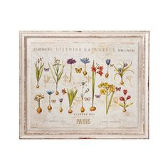 """Embrace the vintage quality of this framed collage-like art piece in your living room or dining room. Displaying the iconic garden art style of showcasing flowers blooming from their bulbs, this piece ...  Find the """"Histoire Naturelle"""" Framed Wall Art, as seen in the #UrbanBohemia Collection at http://dotandbo.com/collections/urbanbohemia?utm_source=pinterest&utm_medium=organic&db_sku=103213"""