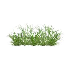 grass 21.png ❤ liked on Polyvore featuring home, home decor, floral decor, flowers, grass, backgrounds, nature, plants, fillers and flower stem