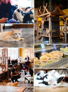 If you're likely to visit 1 cat cafe in Montreal, make sure to stop by Cafe Venosa. Fortunately, there's a cafe for it. Crazy Cat Lady, Crazy Cats, Pet Cafe, Information About Cats, Kitty Cafe, The Last Summer, Cafe Concept, Animal Society, Owning A Cat