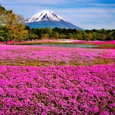 自然を満喫!富士芝桜まつり