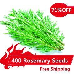 400 로즈마리 씨앗 DIY 정원 식물 쉽게 성장 허브, 야채 씨앗 건강,