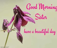 good-morning-sister-have-a-beautiful-day Good Morning Sister Images, Good Morning Gif, Morning Pictures, Good Morning Wishes, Good Morning Quotes, Morning Sayings, Prayers For Sister, Wishes For Sister, Sister Cards