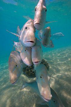 Group Shot Coral Bay