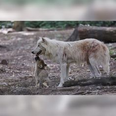 World Of Wolves : Photo