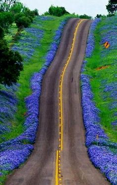 Texas Bluebonnets Highway, USA Id love to ride this road !!  But from the other side,,, on my way down. !!  Lol. BEAUTIFUL !!