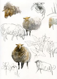 Animal Sketches, Animal Drawings, Art Sketches, Art Drawings, Watercolor Sketchbook, Watercolor Illustration, Watercolor Art, Sheep Paintings, Animal Paintings