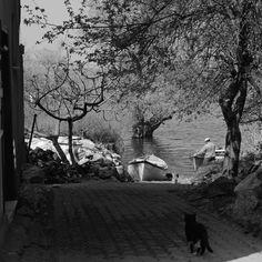 #Regram post to @pinterest #biramatorunobjektifinden #instagramphotos  #fromanamatorsobjective #turkishfollowers  #banabirdeburdanbak #turkeyinstagram  #lookatmefromhere #nikond5200  #turkinstagram #nikon #intstafoto #nature #doğa #view #manzara #nikonforever #dergibursa by biramatorunobjektifinden - #ViralInNature is named by Clutch.co as Canadas Top Social Media Marketing Agency http://vnat.ca/TopSocialMediaAgencyCanada2016 Visit us at http://bit.ly/1seeN6z