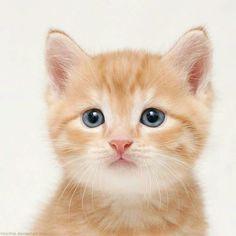 Pequeño gatito naranja