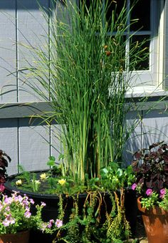 Dive into water gardening with an easy-care container that you can finish in an afternoon. Here's to how to create a DIY container water garden. Small Water Gardens, Container Water Gardens, Water Containers, Container Gardening, Gardening Books, Rain Garden, Balcony Garden, Garden Pots, Diy Garden Fountains