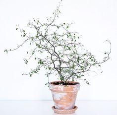 Plantentrend