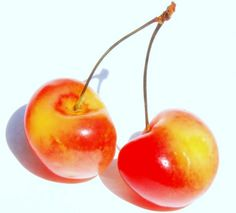 """Rainier cherries are also known as the """"white cherry"""" because they have white, creamy flesh and the skin is yellowish-red blush once they're ripe. Food Alphabet, Rainier Cherries, Cherry Tattoos, Red Blush, White Cherries, Sources Of Fiber, Prunus, Food Staples, Raw Food Recipes"""