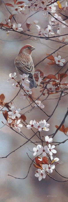 Terry Isaac | Hint of Pink