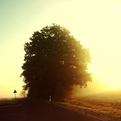 Cool picture by Matthias Heiderich. I like the scale of the tree and the colors. :)