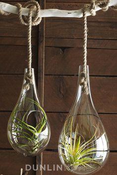 Hand Blown Glass Hanging Terrarium with Sisal Rope