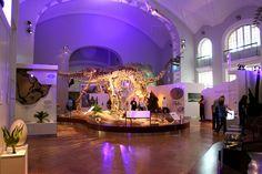 Luonnontieteellinen museo eli entinen Eläinmuseo on osa Helsingin yliopiston Luonnontieteellistä keskusmuseota, joka on Suomen tärkein luonnontieteellinen museo.