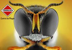 Eliminar un nido de avispas es un asunto difícil y de personas experimentadas. Como muchos de nosotros sabemos, los ocupantes de estos nidos tienden a resistir cualquier esfuerzo por matarlos, picando sin piedad a quienes intentan hacerlo.