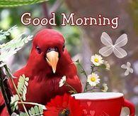 Good Morning Happy Happy Saturday God Bless You