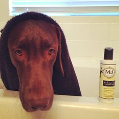 What are you and your pup's resolutions for 2013? Cooper is going to try to look happier during bath time!