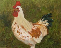 A rooster, 2014 — 11x14 oil on canvas, in the collection of Sally and Dick Darling.