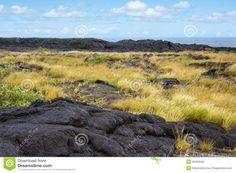 Più vecchio flusso di lava con le piante, Hawai